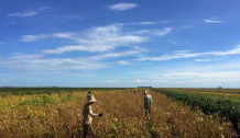 Huawei 5G equipment helps Soy farmers battle crop diseases in Brazil