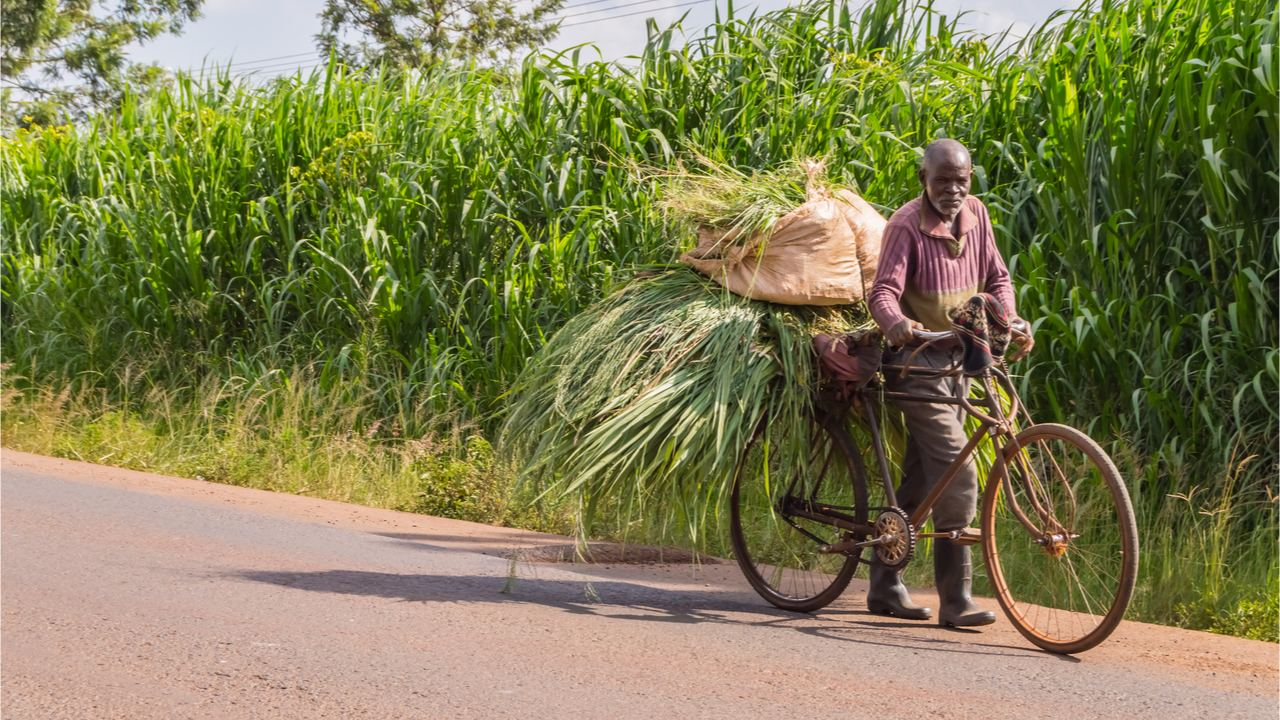 Kenyan Farmers Pivot to Cryptocurrency as Popularity of Community Currencies Grows